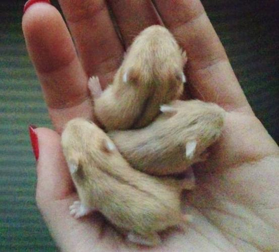 Hamster Babies For Sale Nude and Porn Pictures
